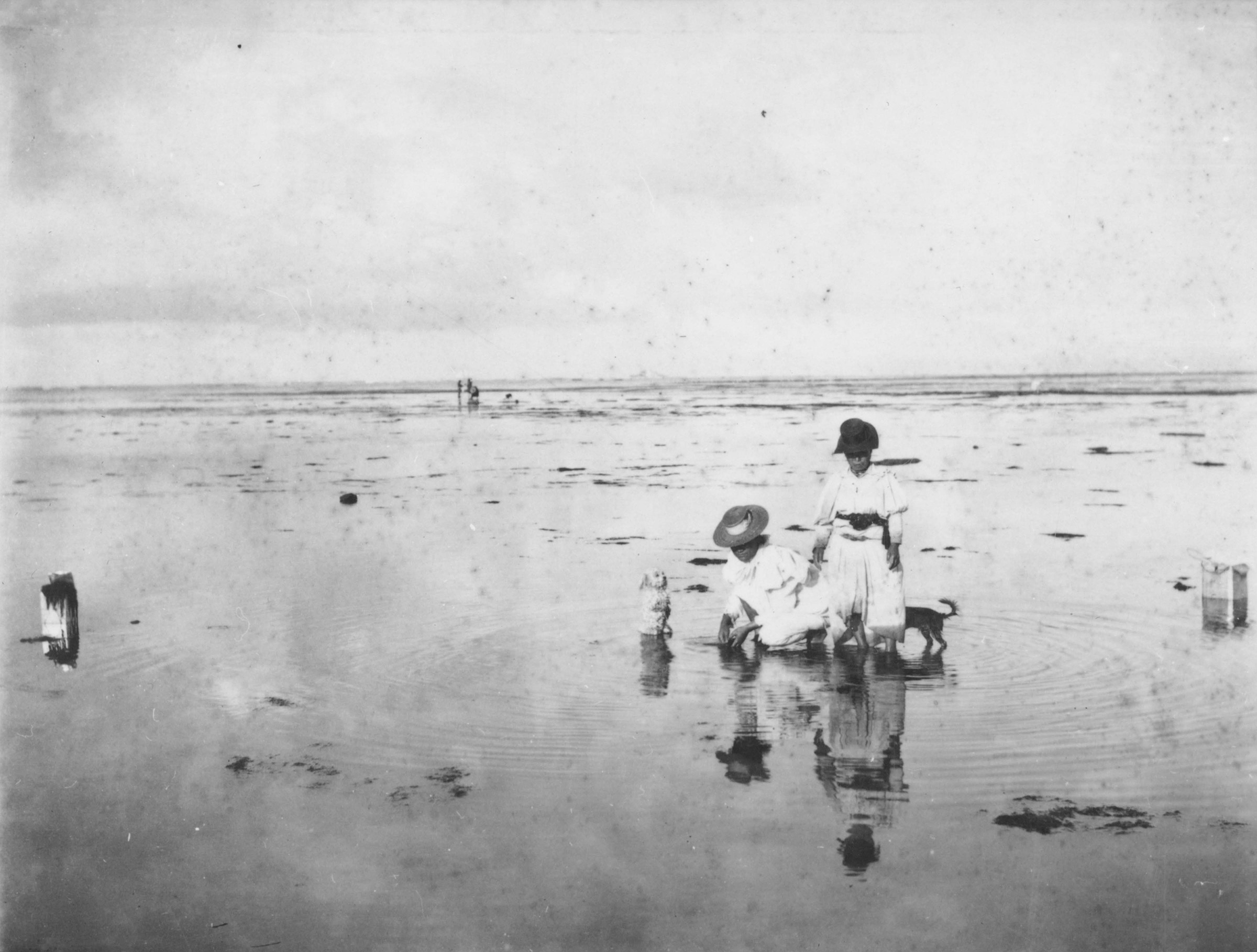 [Women gathering limu on shoreline] Hawaiʻi, ca. 1897. Photo by Frank Davey.