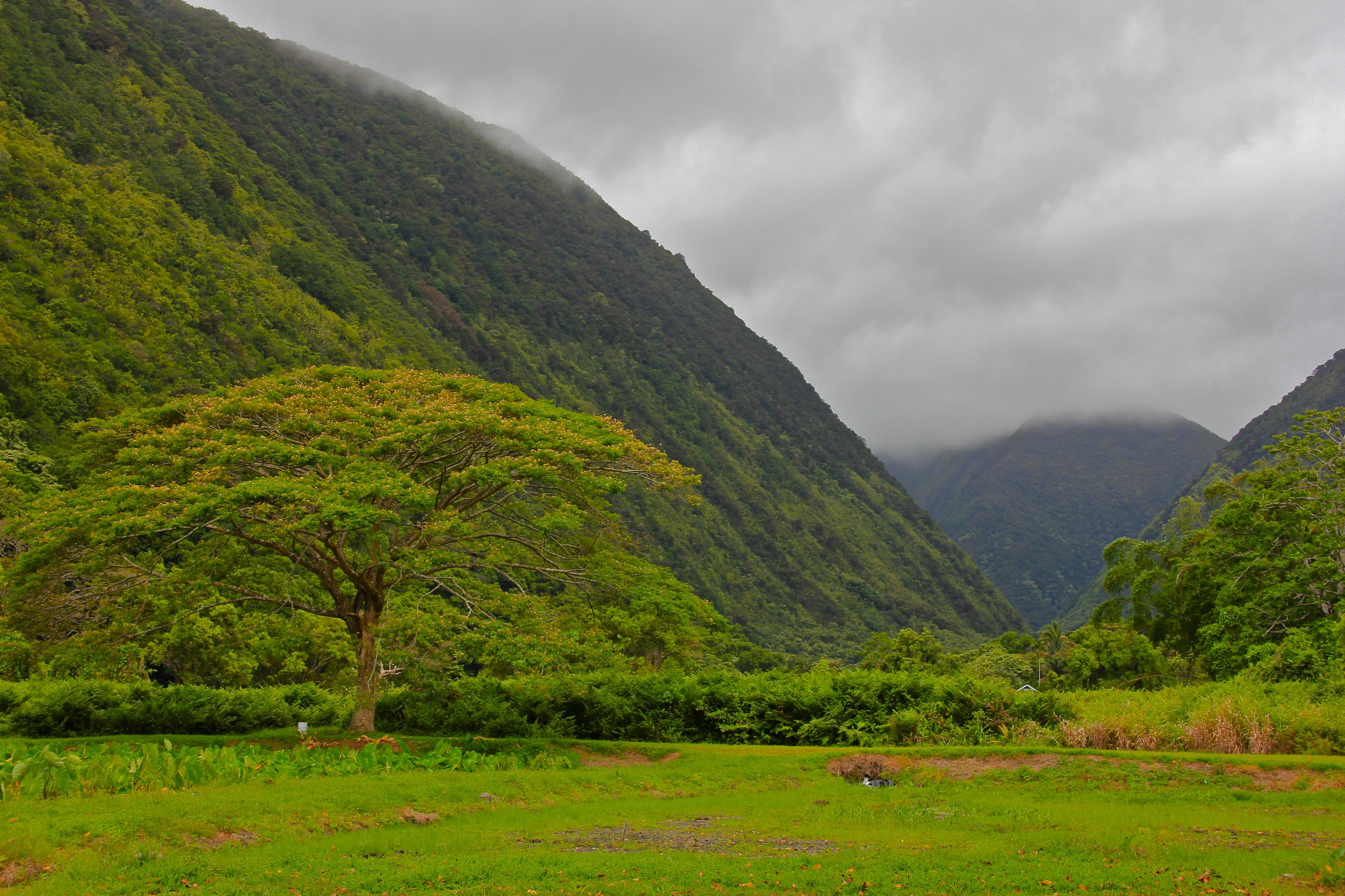 [Waipiʻo Valley] Photo by Navin75.
