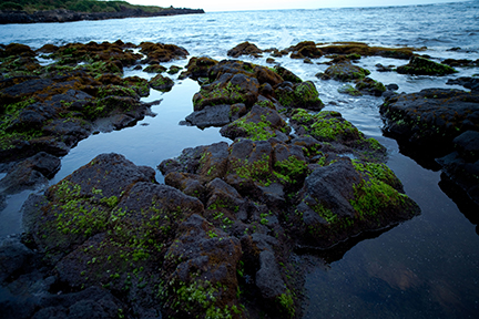 [Tide pools] Photo by Ruben Carillo.