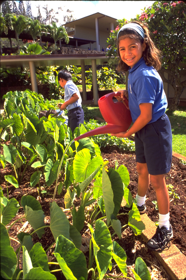 [Student watering kalo] Photo by Michael Young.