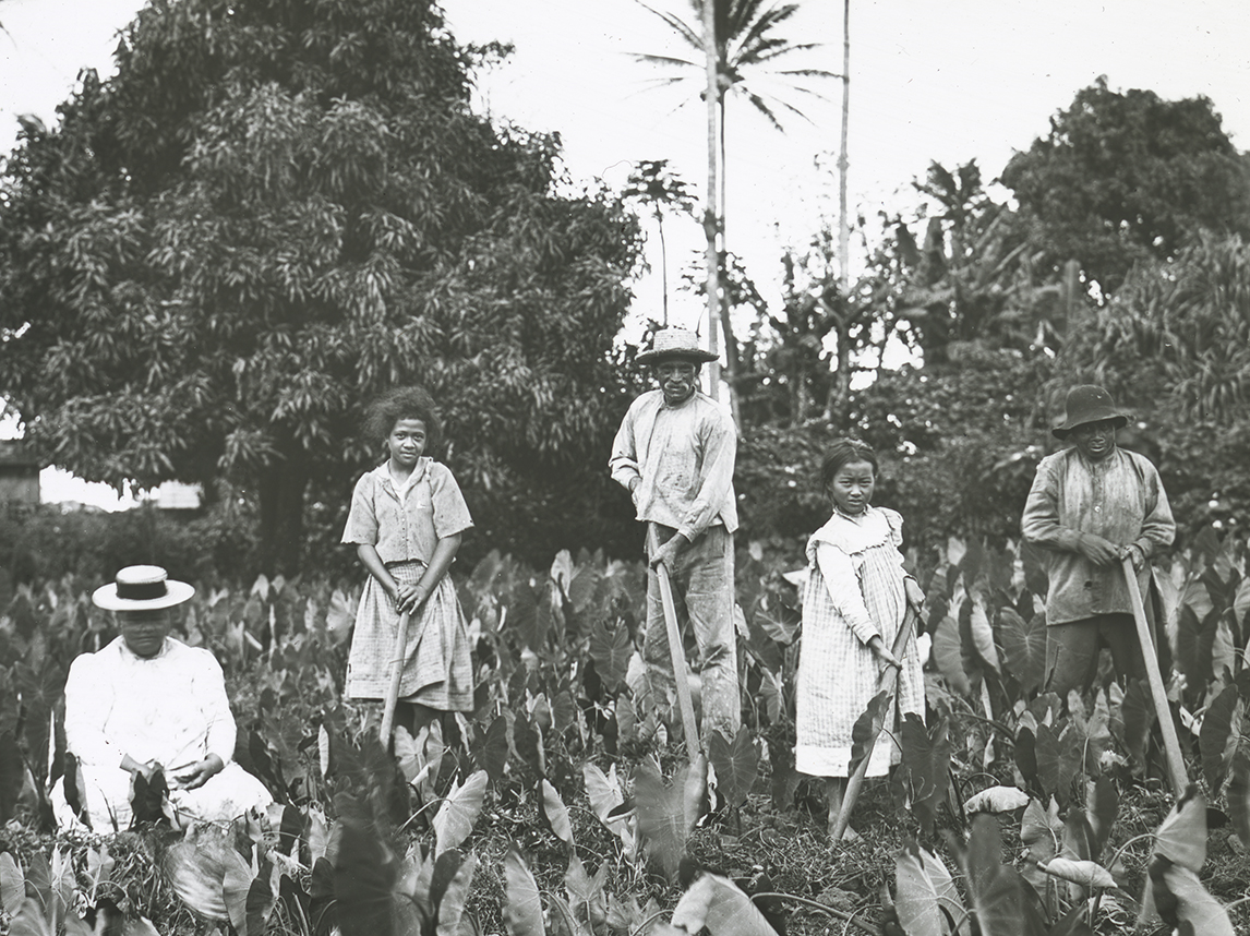 [Family working in loʻi kalo] Photo by Henshaw.
