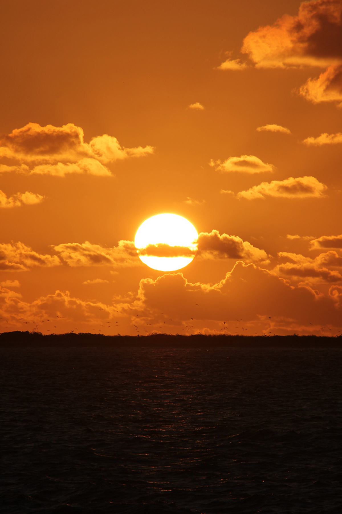 [Rising sun over Eastern Island, Midway Atoll] Photo by Andy Collins.